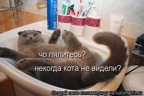 Котоматрица: чо пялитесь? некогда кота не видели?