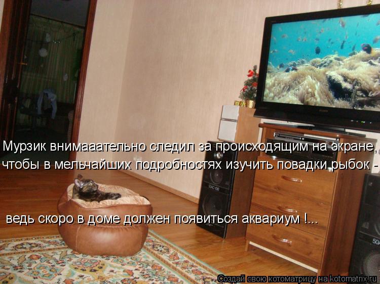 Котоматрица: Мурзик внимааательно следил за происходящим на экране, чтобы в мельчайших подробностях изучить повадки рыбок -  ведь скоро в доме должен по