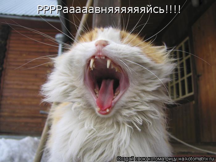 Котоматрица: РРРРааааавняяяяяяйсь!!!!