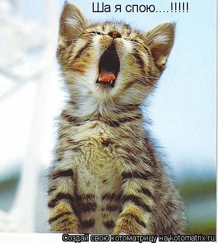 Котоматрица: Ша я спою....!!!!!