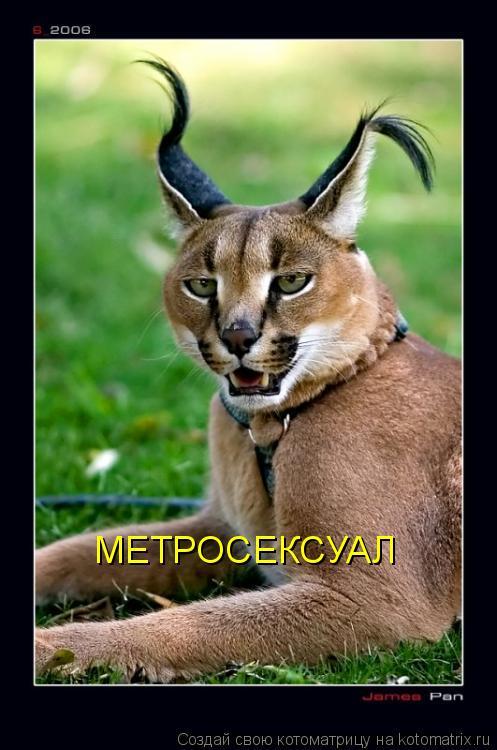 Котоматрица: МЕТРОСЕКСУАЛ