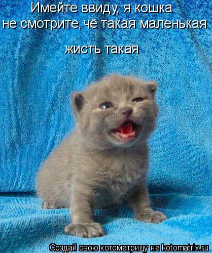 Котоматрица: не смотрите,  чё такая маленькая Имейте ввиду, я кошка жисть такая