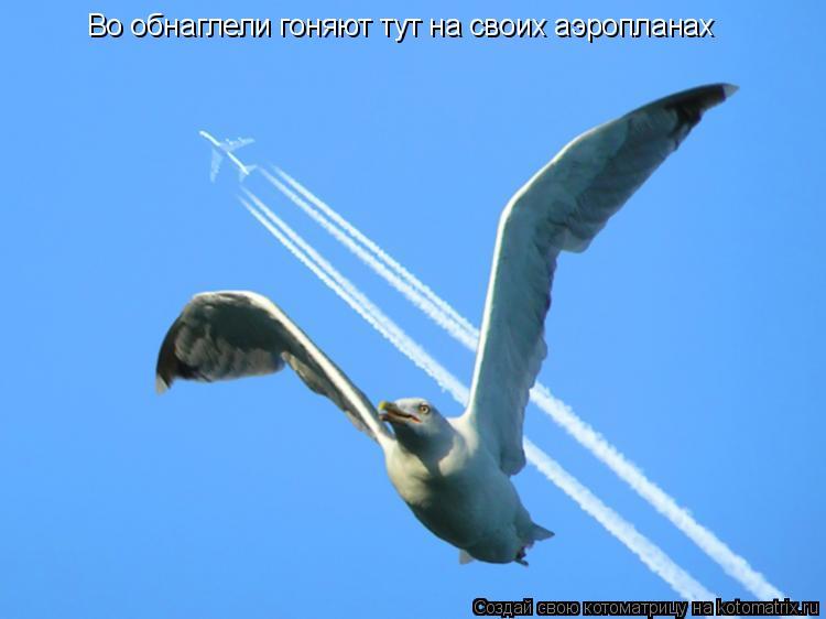 Котоматрица: Во обнаглели гоняют тут на своих аэропланах