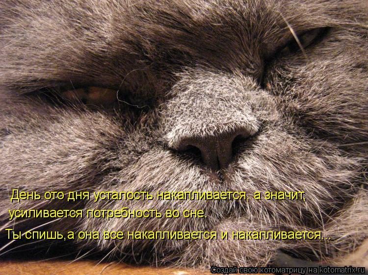 Котоматрица: День ото дня усталость накапливается, а значит, усиливается потребность во сне. Ты спишь,а она все накапливается и накапливается...
