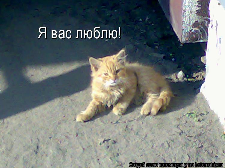 Котоматрица: Я вас люблю!