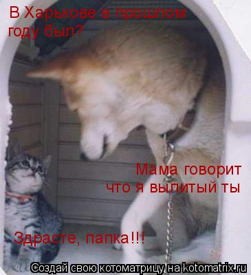 Котоматрица: В Харькове в прошлом  году был? Мама говорит что я вылитый ты Здрасте, папка!!!