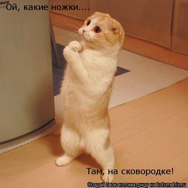 Котоматрица: Ой, какие ножки.... Там, на сковородке!
