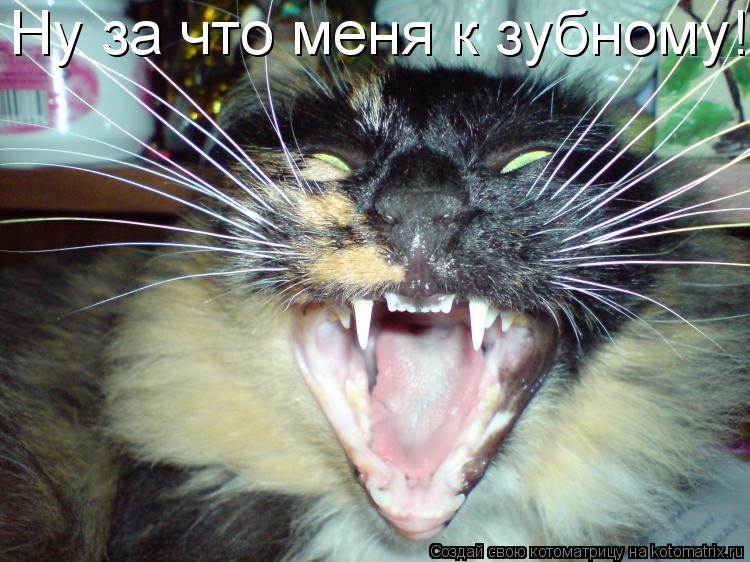 Котоматрица: Ну за что меня к зубному!