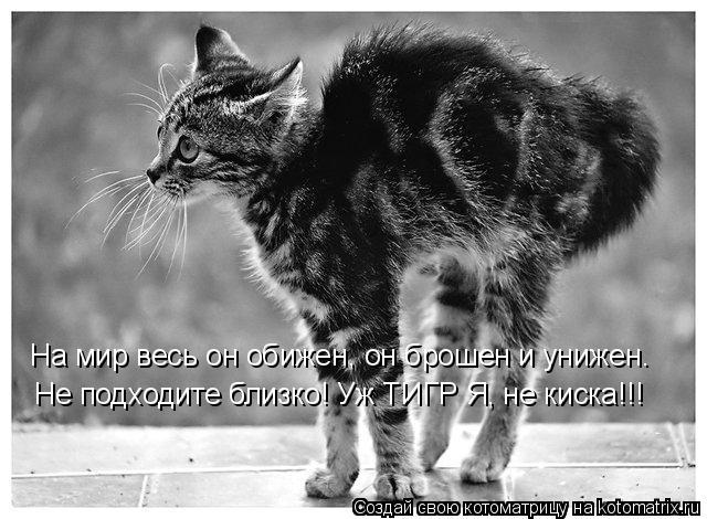 Котоматрица: Не подходите близко! Уж ТИГР Я, не киска!!! На мир весь он обижен, он брошен и унижен.