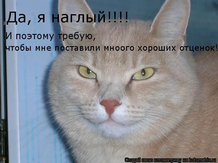 Котоматрица: Да, я наглый!!!! И поэтому требую,  чтобы мне поставили мноого хороших отценок!!!