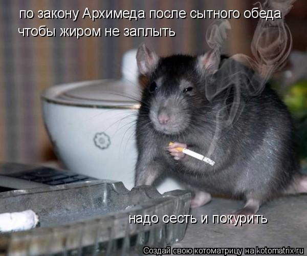 Котоматрица: по закону Архимеда после сытного обеда чтобы жиром не заплыть надо сесть и покурить