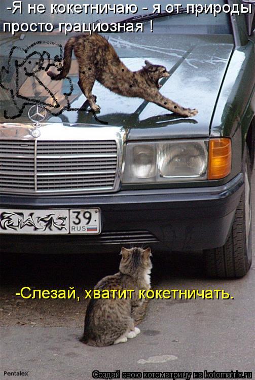 Котоматрица: -Я не кокетничаю - я от природы  просто грациозная ! -Слезай, хватит кокетничать.