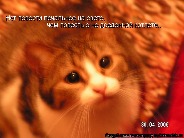 Котоматрица: Нет повести печальнее на свете.... чем повесть о не доеденной котлете...