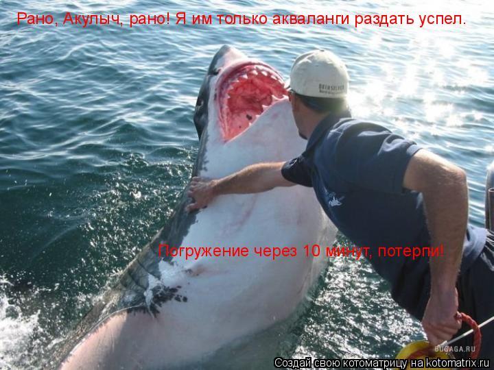 Котоматрица: Рано, Акулыч, рано! Я им только акваланги раздать успел. Погружение через 10 минут, потерпи!