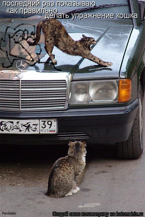 Котоматрица: последний раз показываю как правильно делать упражнение кошка