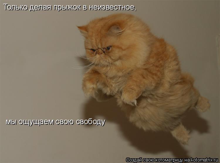 Котоматрица: Только делая прыжок в неизвестное,  мы ощущаем свою свободу