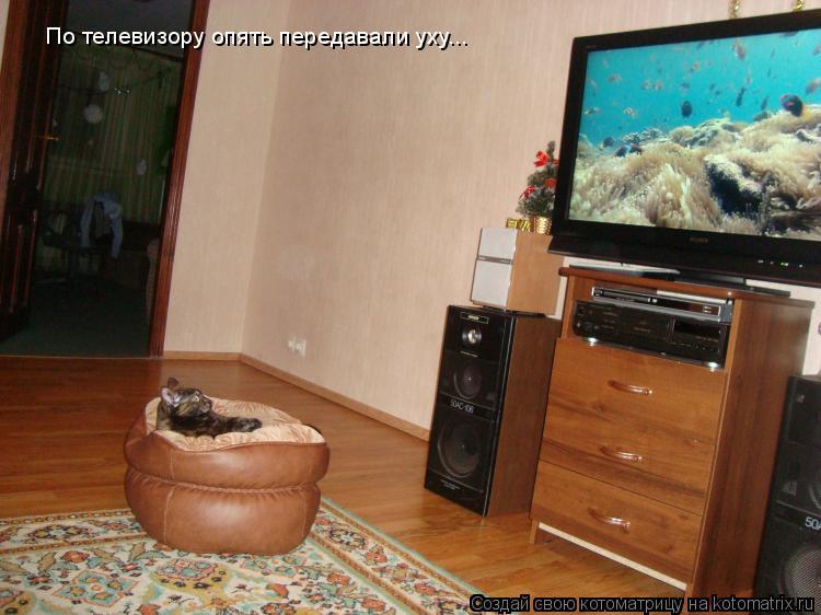 Котоматрица: По телевизору опять передавали уху...