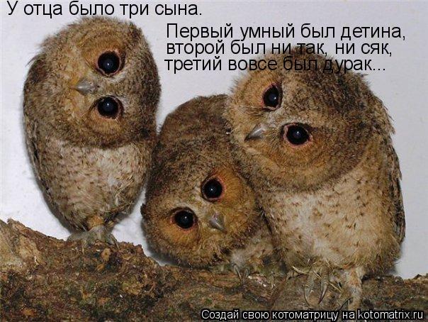 Котоматрица: У отца было три сына. Первый умный был детина, второй был ни так, ни сяк, третий вовсе был дурак...