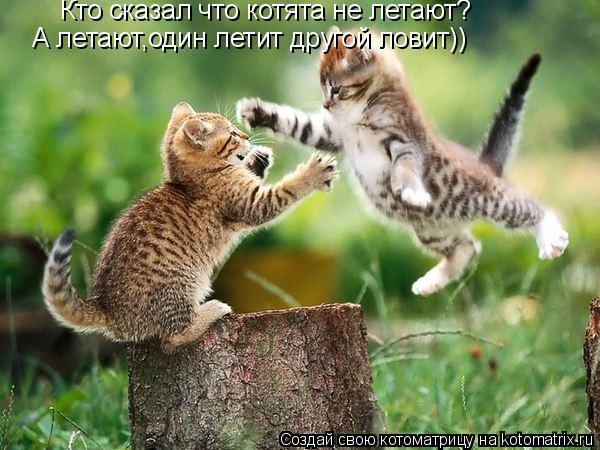 Котоматрица: Кто сказал что котята не летают? А летают,один летит другой ловит))