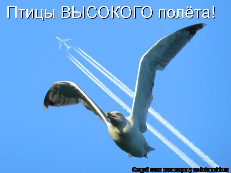 Котоматрица: Птицы ВЫСОКОГО полёта!