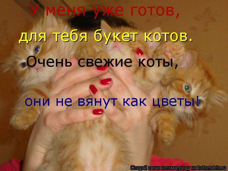 Котоматрица: У меня уже готов, для тебя букет котов. Очень свежие коты, они не вянут как цветы!
