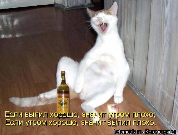 Котоматрица: Если выпил хорошо, значит утром плохо; Если утром хорошо, значит выпил плохо.