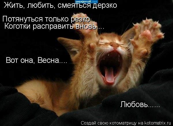 Котоматрица: Жить, любить, смеяться дерзко Потянуться только резко Коготки расправить вновь.... Вот она, Весна.... Любовь......