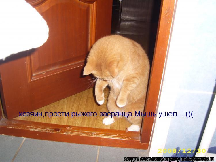 Котоматрица: хозяин,прости рыжего засранца.Мышь ушёл....(((
