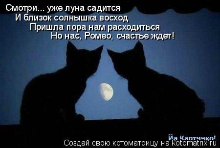 Котоматрица: Смотри... уже луна садится И близок солнышка восход Пришла пора нам расходиться Но нас, Ромео, счастье ждет!