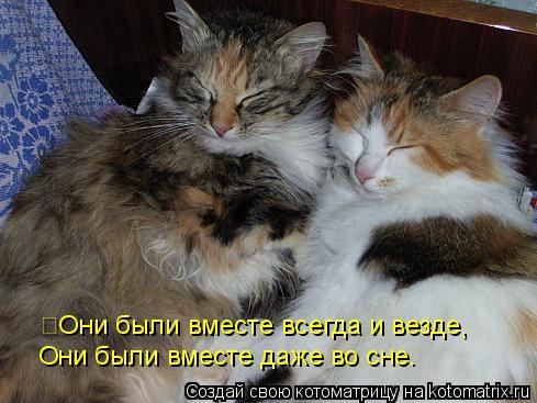 Котоматрица: Они были вместе всегда и везде, Они были вместе даже во сне.