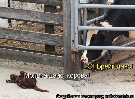 Котоматрица: -О! Брейк-данс! -Молока-дайс, корова!