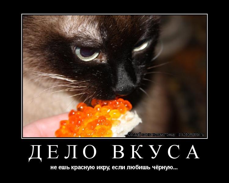 Котоматрица: дело вкуса не ешь красную икру, если любишь чёрную...