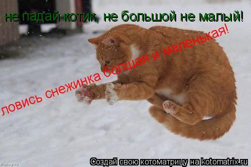 Котоматрица: ловись снежинка болшая и маленькая! не падай котик, не большой не малый!
