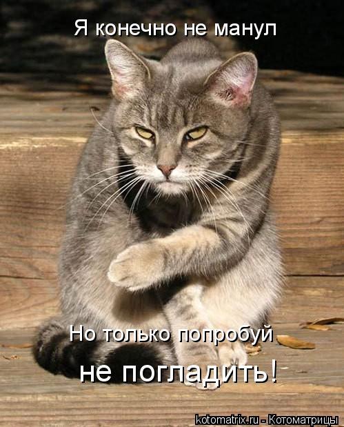 Котоматрица: Я конечно не манул Но только попробуй не погладить!