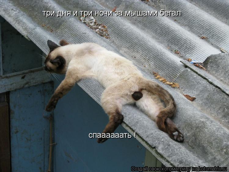 Котоматрица: три дня и три ночи за мышами бегал  спаааааать !