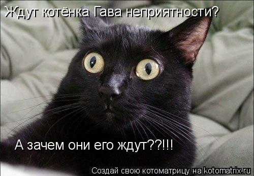 Котоматрица: Ждут котёнка Гава неприятности? А зачем они его ждут??!!!