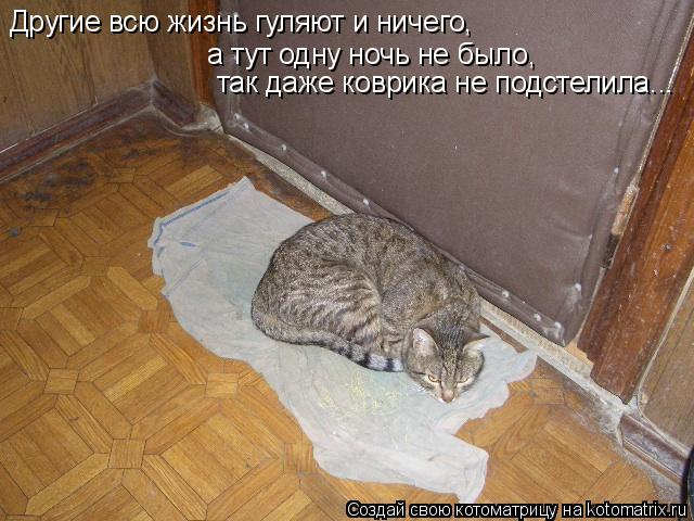 Котоматрица: Другие всю жизнь гуляют и ничего, а тут одну ночь не было,  так даже коврика не подстелила...