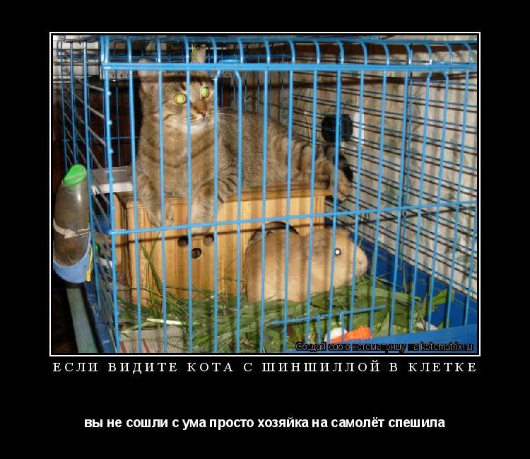 Котоматрица: если видите кота с шиншиллой в клетке вы не сошли с ума просто хозяйка на самолёт спешила