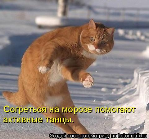 Котоматрица: Согреться на морозе помогают активные танцы.