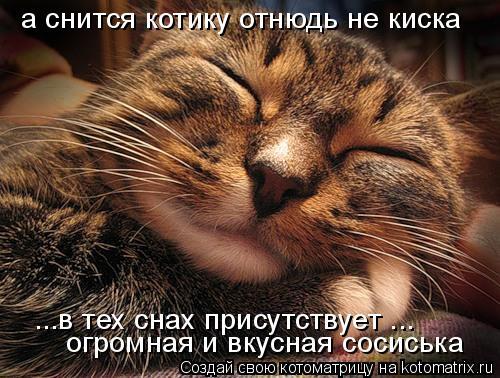 Котоматрица: а снится котику отнюдь не киска ...в тех снах присутствует ... огромная и вкусная сосиська