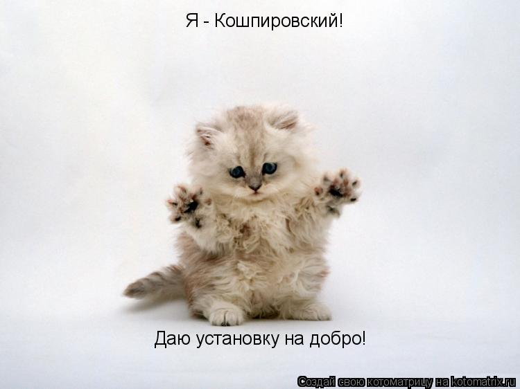 Котоматрица: Я - Кошпировский! Даю установку на добро!