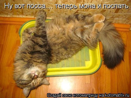 Котоматрица: Ну вот посса.... теперь мона и поспать