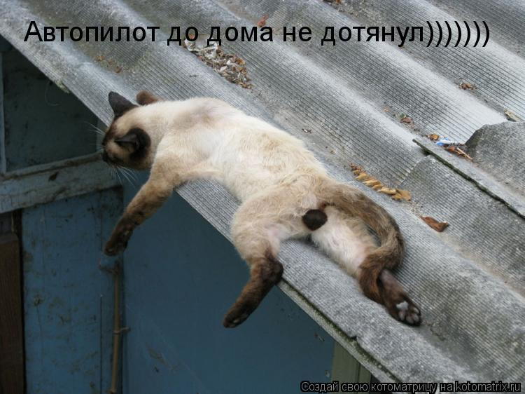 Котоматрица: Автопилот до дома не дотянул)))))))