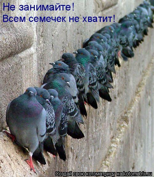 Котоматрица: Не занимайте! Всем семечек не хватит!