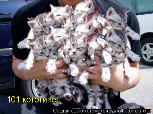 Котоматрица: 101 кототинец