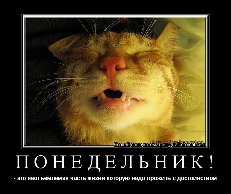 Котоматрица: Понедельник! - это неотъемлемая часть жизни которую надо прожить с достоинством