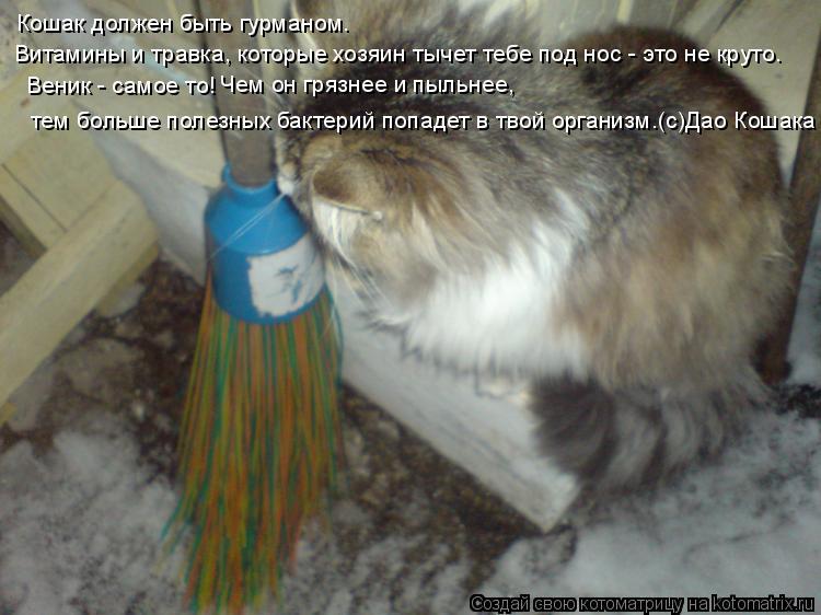 Котоматрица: Кошак должен быть гурманом.  Витамины и травка, которые хозяин тычет тебе под нос - это не круто.   Веник - самое то!  Чем он грязнее и пыльнее,