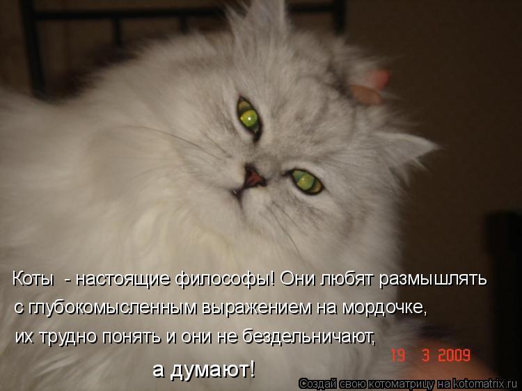 Котоматрица: Коты  - настоящие философы! Они любят размышлять  с глубокомысленным выражением на мордочке, их трудно понять и они не бездельничают,  а дума
