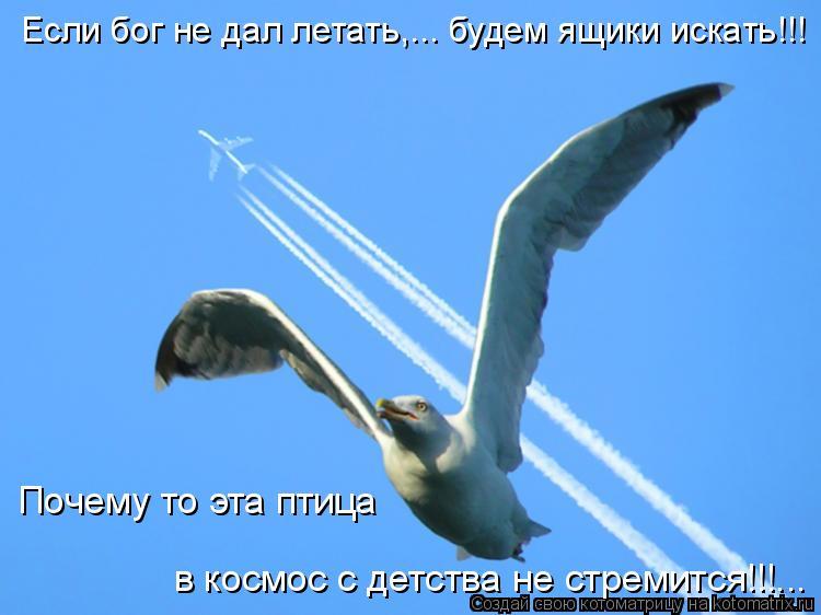 Котоматрица: Если бог не дал летать,... будем ящики искать!!! Почему то эта птица в космос с детства не стремится!!!...