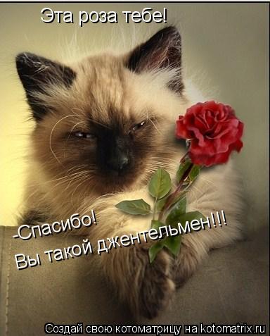 Котоматрица: Эта роза тебе! -Спасибо!  Вы такой джентельмен!!!